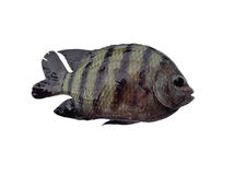 Lovely fish Royalty Free Stock Photography