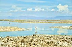 Lovely Flamingo Royalty Free Stock Image