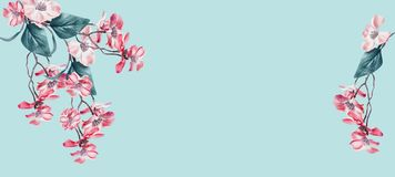 Lovely floral background frame with coral flowers blossom on light turquoise. Template or banner. Floral composing stock images