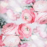 Lovely floral background with pretty pink pale flowers and bokeh Royalty Free Stock Photography