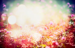 Lovely floral nature background with wild flowers on meadow and bokeh light Stock Photo