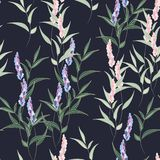 Lovely floral seamless pattern. Pink and violet lavender flowers and leaves. royalty free illustration
