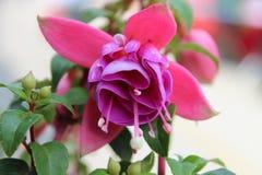 So lovely flower booming in Sunday morning Stock Image
