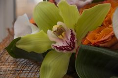 Lovely flower orchid of green color. Still life.  stock photo