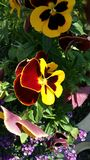 Lovely Flower Royalty Free Stock Photos