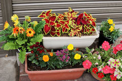 Lovely flower pot garden on pavement Royalty Free Stock Images