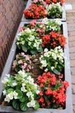 Lovely flower pot garden on pavement Royalty Free Stock Photo