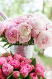 Lovely flowers in glass vase. Beautiful bouquet of pink peonies . Floral composition, scene, daylight. Wallpaper. Lovely flowers in glass vase. Beautiful bouquet royalty free stock image