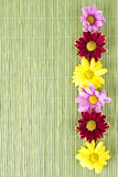 Lovely flowers on green background spa motive Stock Images
