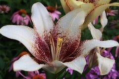 Lovely flowers. White flower summer Stock Images