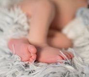 Lovely folded legs of newborn baby on furry blanket Stock Photos