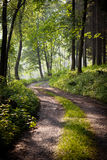 Lovely Forest Path In Early Morning Stock Photos