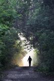 Lovely forest road royalty free stock photography