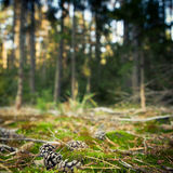 Lovely forest scenery Stock Image