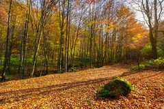 Lovely forest scenery in autumn. Boulder on the ground in fall foliage stock image