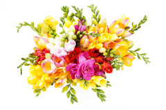 Lovely freesia. Bunch of lovely freesia on white background - flowers and plants Royalty Free Stock Photos