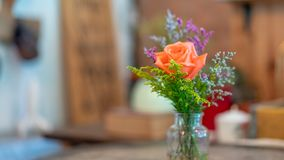 Lovely Fresh Rose In Vase stock photos