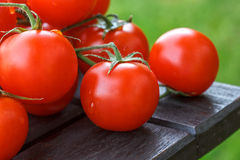 Lovely fresh small red tomatoes on the vine Royalty Free Stock Photo