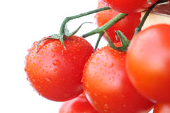 Lovely fresh small red tomatoes on the vine Royalty Free Stock Photography