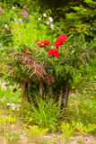 Lovely garden. Ornamental flowers in a lovely garden royalty free stock image