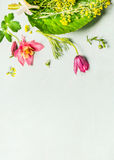 Lovely garden plant and flowers on light green background, top view, Royalty Free Stock Photo