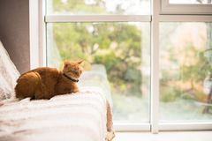 Lovely ginger cat on a sofa by the window Royalty Free Stock Images
