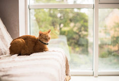 Lovely ginger cat on a sofa by the window Royalty Free Stock Photography