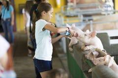 Lovely Girl feeds Pig Stock Photography
