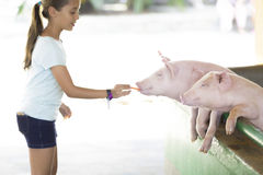 Lovely Girl feeds Pig Royalty Free Stock Photos