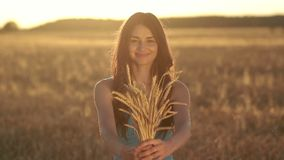 Lovely girl holding ripened wheat ears on field stock footage