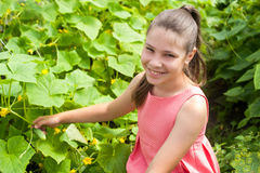 Lovely girl picking cucumber Royalty Free Stock Photo