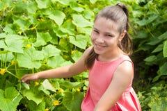 Lovely girl picking cucumber Royalty Free Stock Photo
