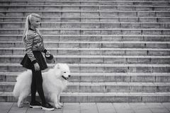 Lovely girl on a walk with a beautiful dog. Lovely girl on a walk with a beautiful fluffy dog Samoyedr Royalty Free Stock Photography