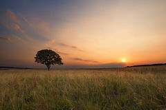 Lovely grasland sunset with tree and bright colours clouds Royalty Free Stock Photos