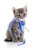 Lovely gray kitten with a tape. Royalty Free Stock Photo