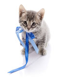 Lovely gray kitten with a tape. Stock Photo