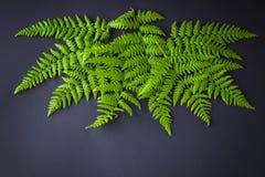 Green fern on dark background stock photos