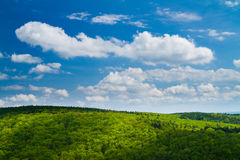 Lovely green forest with blue sky. Beautiful green trees in spring with blue sky above stock photography