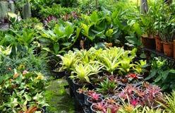 Lovely green garden Royalty Free Stock Photos
