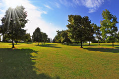 Lovely green grassy lawn at sunset Royalty Free Stock Image