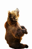 Lovely Grizzly Bear Royalty Free Stock Photography