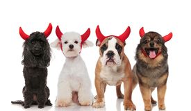 Lovely group of four cute dogs dressed as devils royalty free stock photo