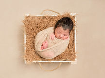 Lovely hairy baby resting in a basket Royalty Free Stock Photo