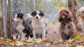 Lovely Havanese breed puppies look through the kennel or shelter fence. Dogs breed Havanese look out of the kennel fence, waiting for the owner, barks stock video footage
