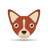 Lovely head puppy dog chihuahua brown Royalty Free Stock Image