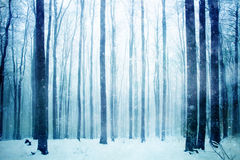 Lovely heavy snowfall in the foggy forest Royalty Free Stock Image