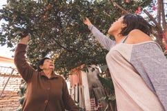 Lovely hispanic grandmother granddaughter picking Stock Photos