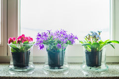 Lovely home decoration with glass flowers pots on windowsill Stock Images