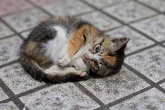 A lovely Homeless Cat stock images