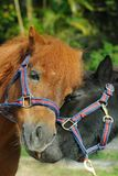 Lovely horse Royalty Free Stock Photography